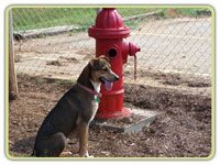 Lilly guarding the minding the fire hydrant